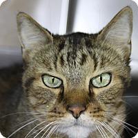Adopt A Pet :: Kip - Sarasota, FL
