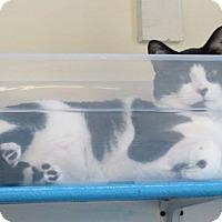 Adopt A Pet :: Holstein - Alexandria, VA