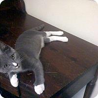 Adopt A Pet :: MELVIN - Raleigh, NC