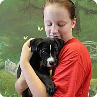 Adopt A Pet :: Banner - Elyria, OH