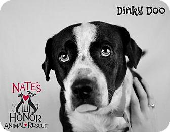 Basset Hound Mix Dog for adoption in Bradenton, Florida - Dinky Doo