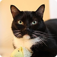 Adopt A Pet :: Nova - Winston-Salem, NC