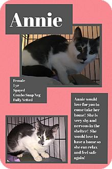 Domestic Shorthair Cat for adoption in CLEVELAND, Ohio - Annie