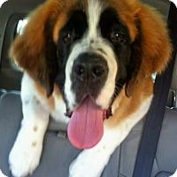 Adopt A Pet :: Pumpkin - Lake Forest, CA