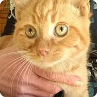 Adopt A Pet :: Omar - Ashtabula, OH
