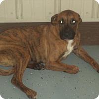 Adopt A Pet :: Tyson - Newport, KY