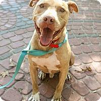 Adopt A Pet :: Bonez - Jacksonville, NC