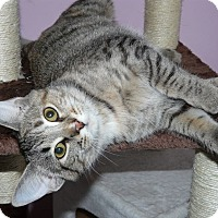 Adopt A Pet :: Athena - Middletown, OH