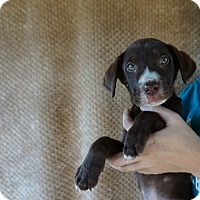 Adopt A Pet :: Kobi - Oviedo, FL