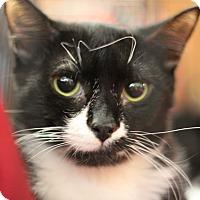 Adopt A Pet :: Caley - Marietta, GA