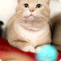 Adopt A Pet :: Mellow - Appleton, WI