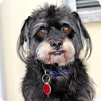 Adopt A Pet :: Seargent - Los Angeles, CA