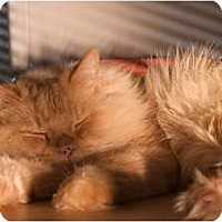 Adopt A Pet :: Toby - Santa Rosa, CA