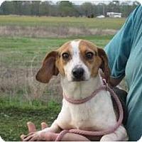 Adopt A Pet :: Abby - Greenville, RI