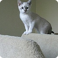 Adopt A Pet :: Mistletoe - Irvine, CA