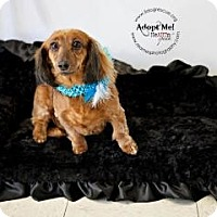 Adopt A Pet :: Sophie - Shawnee Mission, KS