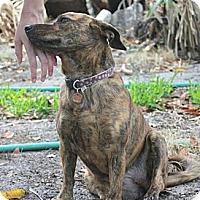 Adopt A Pet :: Lisa - Miami, FL