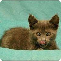 Adopt A Pet :: Chaz - Sacramento, CA
