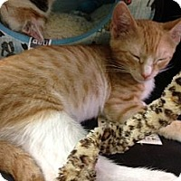 Adopt A Pet :: Keith - Farmingdale, NY