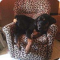 Adopt A Pet :: RaynA - Gilbert, AZ