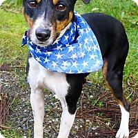 Adopt A Pet :: Maximus companion dog - Sacramento, CA