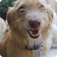 Adopt A Pet :: Moe - Meet Him!!!! - Norwalk, CT