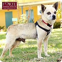 Adopt A Pet :: Russell - Marina del Rey, CA