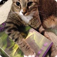 Adopt A Pet :: Eliot - Morganton, NC