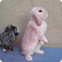 Adopt A Pet :: Avery& Adeline - Bonita, CA