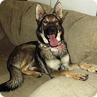 Adopt A Pet :: Tsunami - Gilbert, AZ