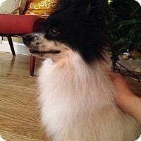 Adopt A Pet :: Tivo - Windermere, FL