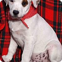 Adopt A Pet :: Rocky - Toms River, NJ