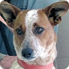 Adopt A Pet :: Bella Lea
