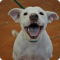 Adopt A Pet :: S/C Blanco - Miami, FL