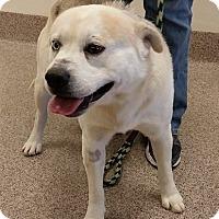 Adopt A Pet :: Olaf - Gainesville, FL