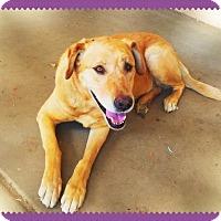 Adopt A Pet :: LULU - Happy Girl! - Chandler, AZ