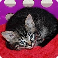 Adopt A Pet :: Oceana - Salem, WV