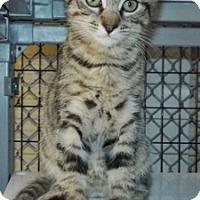 Adopt A Pet :: Jack - Grants Pass, OR
