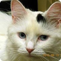 Adopt A Pet :: Snowflake - Herndon, VA