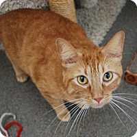 Adopt A Pet :: Ginger - Council Bluffs, IA