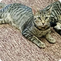 Adopt A Pet :: Rexx - Tampa, FL