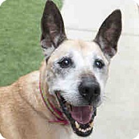 Adopt A Pet :: Mia - Agoura, CA