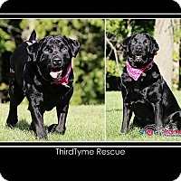 Adopt A Pet :: Carlie - Mount Gilead, OH