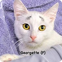 Adopt A Pet :: Georgette - West Orange, NJ
