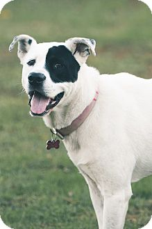 Border Collie Mix Dog for adoption in Springfield, Missouri - Turley