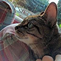 Adopt A Pet :: Jag - Gaithersburg, MD