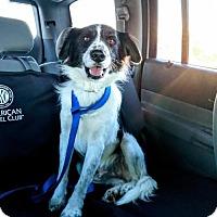 Adopt A Pet :: Landry D3395 - Shakopee, MN