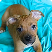 Adopt A Pet :: Kenna - Pompton Lakes, NJ