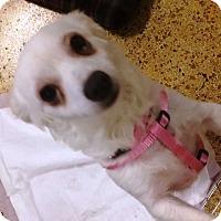 Adopt A Pet :: Tatiana - Concord, CA
