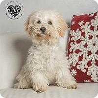 Adopt A Pet :: Jasper - Inglewood, CA